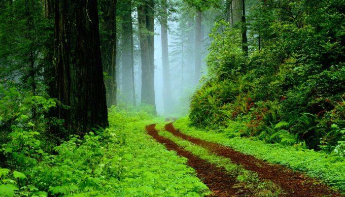 šumsko kupanje i stres