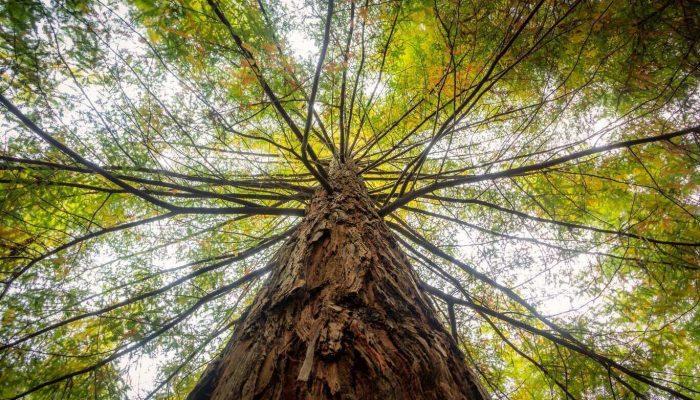 Asocijacija-prirodne-i-sumske-medicine-Forest-sumsko-kupanje-forest-bathing